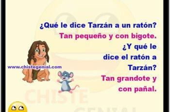 ¿Qué le dice Tarzán a un ratón? Tan pequeño y con bigote. ¿Y qué le dice el ratón a Tarzán? Tan grandote y con pañal.