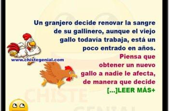 Renovando el gallinero