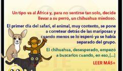 Chistes de animales - El chihuahua, la pantera y el mono.