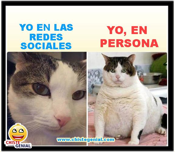 Chistes gráficos de animales - Asi me veo en las redes sociales