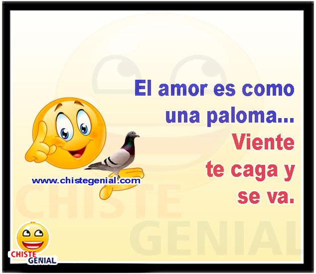 El amor es como una paloma Viente te caga y se va - chistes cortos