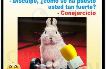 Chistes cortos buenos - Entrevista al señor conejo.