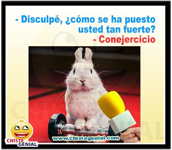 Resultado de imagen de chistes de conejos