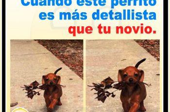 Chistes gráficos - Cuando tu perro es más detallista que tu novio