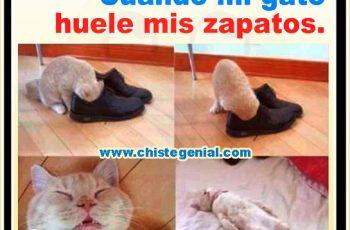 Chistes de animales - Cuando mi gato huele mis zapatos