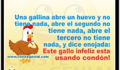 Chistes divertidos de animales - La gallina enojada
