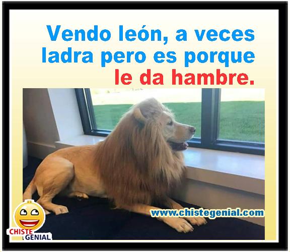 Chistes gráficos - Vendo león, a veces ladra, pero es porque tiene hambre