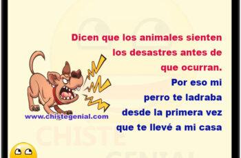 Dicen que los animales sienten los desastres antes de que ocurran. Por eso mi perro te ladraba desde la primera vez que te llevé a mi casa