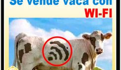 Se vende vaca con Wi-Fi