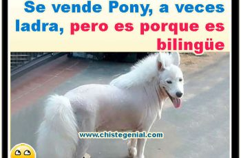 Se vende pony