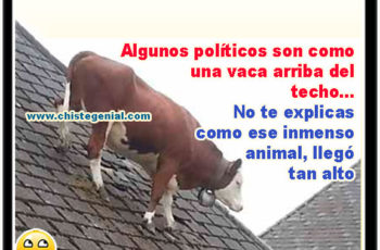 El político y la vaca - Chistes de políticos