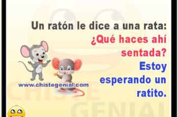 Un ratón le dice a una rata: ¿Qué haces ahí sentada? - Chistes para niños