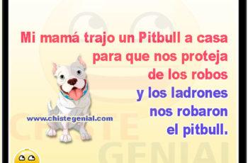 Mi mamá trajo un Pitbull a casa