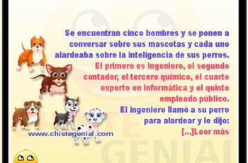El perro más inteligente del mundo - Chistes de animales