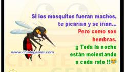 Si los mosquitos fueran machos, te picarían y se irían - Chistes cortos