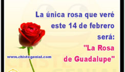 """La única rosa que veré este 14 de febrero será: """"La Rosa de Guadalupe"""""""