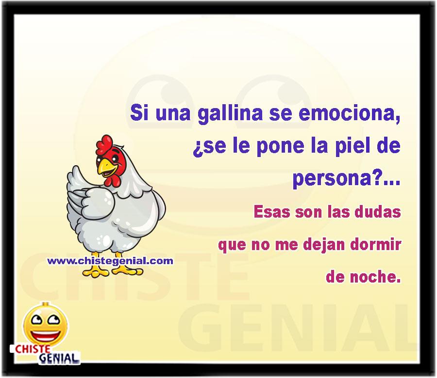 ¿Si una gallina se emociona, se le pone la piel de persona?... Esas son las dudas que no me dejan dormir de noche.